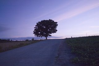 1296-2008-hokkaido-15.jpg