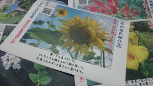 DSC_3968.JPG
