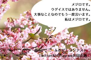 吹き出しコンテスト�@決定Twitter.jpg