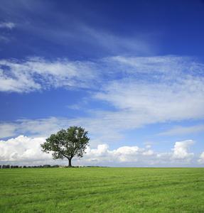 大草原の大きな木.JPG